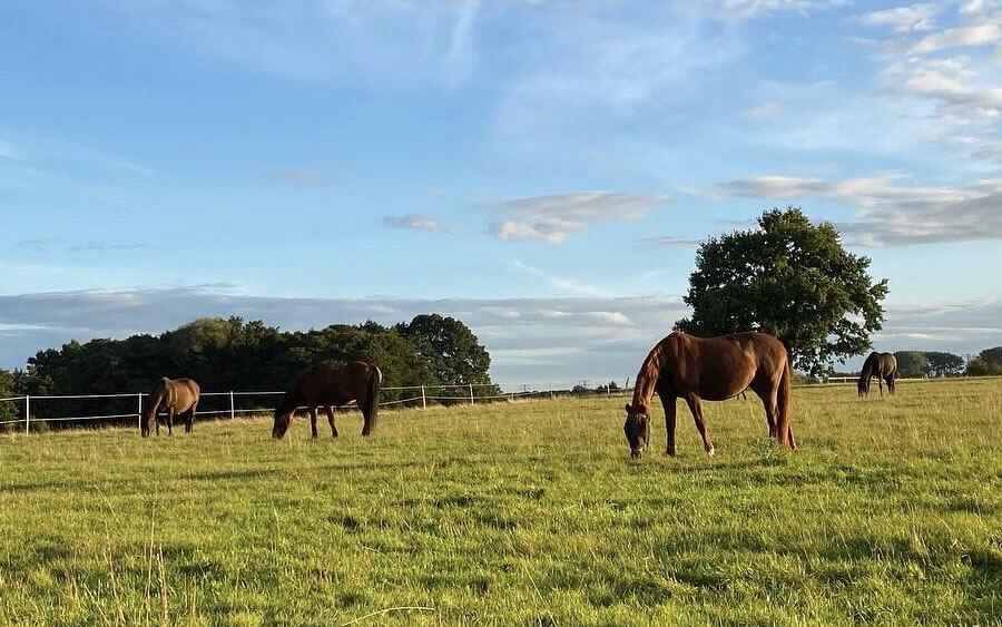 Pferdestall für rehegefaerdete Pferde in Luechow bei Sandesneben