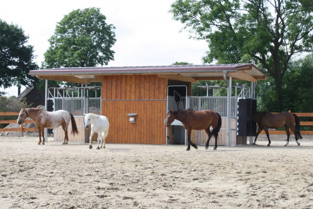 Pferdepension und Reitanlage in Lüchow