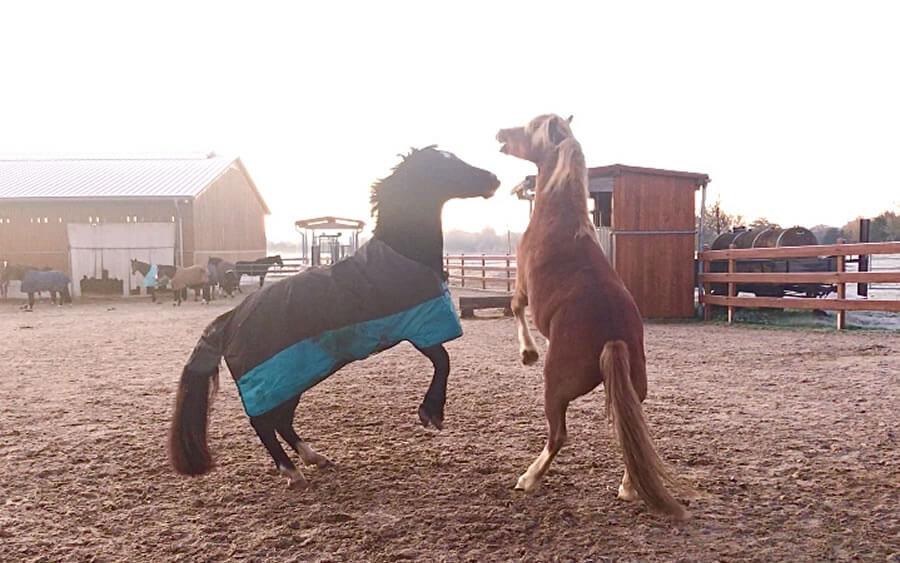 Pferde-Hustenkammer in Luechow bei Sandesneben