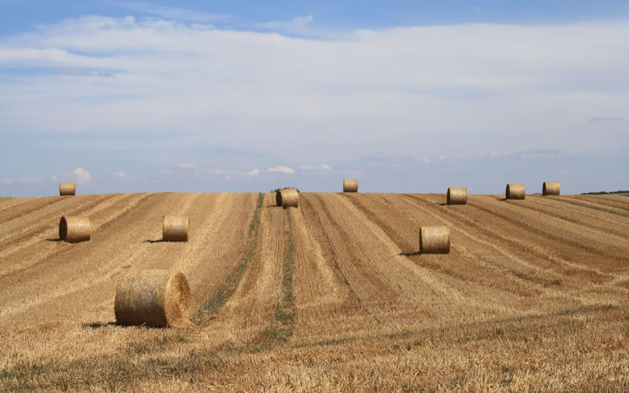 Bauernhof und Reitanlage in Lüchow